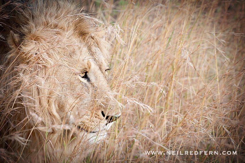 Safari Honeymoon Kenya Photographs 01