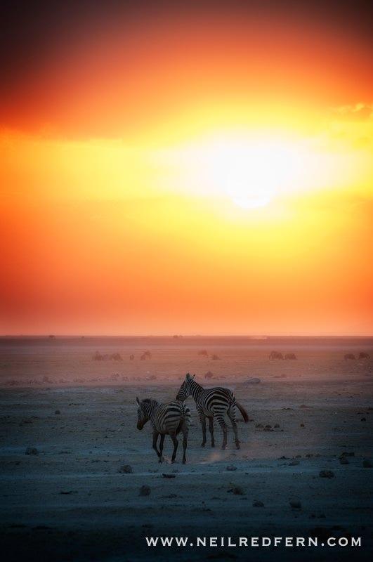 Safari Honeymoon Kenya Photographs 02