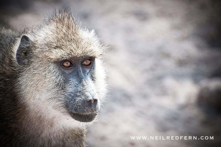 Safari Honeymoon Kenya Photographs 04