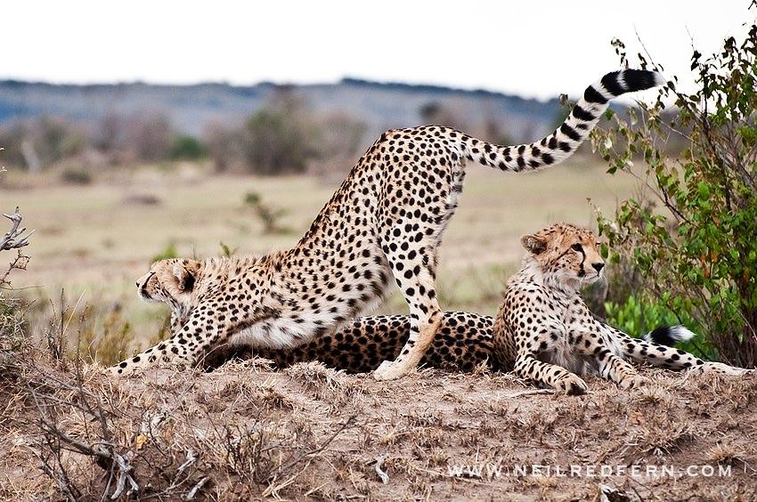Safari Honeymoon Kenya Photographs 07