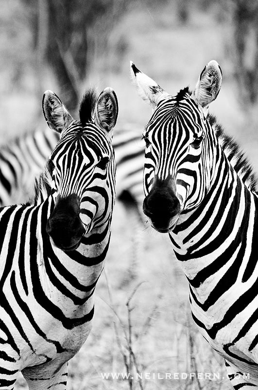 Safari Honeymoon Kenya Photographs 09