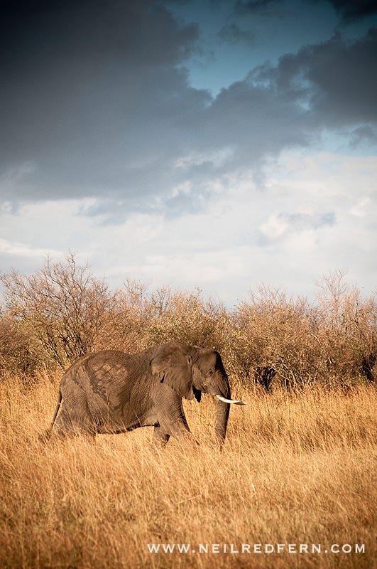 Safari Honeymoon Kenya Photographs 10
