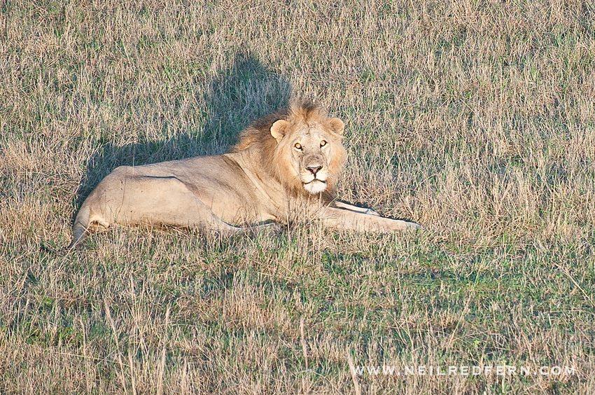 Safari Honeymoon Kenya Photographs 12