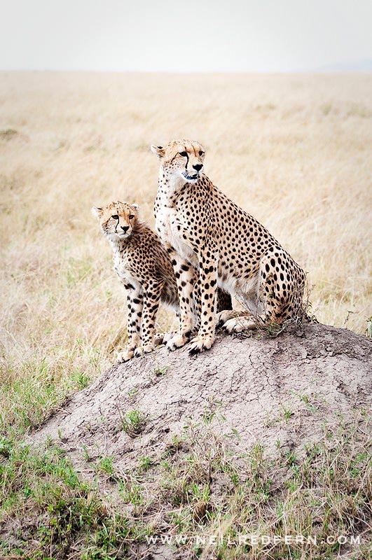 Safari Honeymoon Kenya Photographs 13