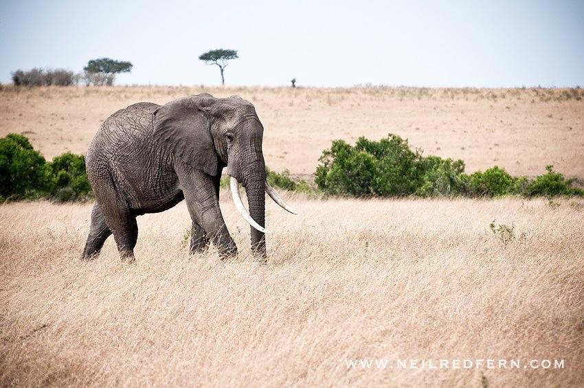 Safari Honeymoon Kenya Photographs 14