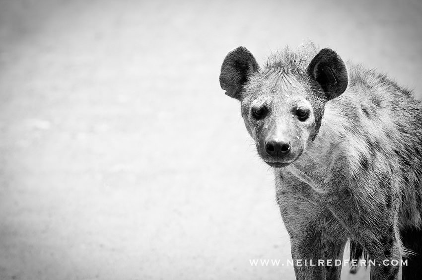 Safari Honeymoon Kenya Photographs 15