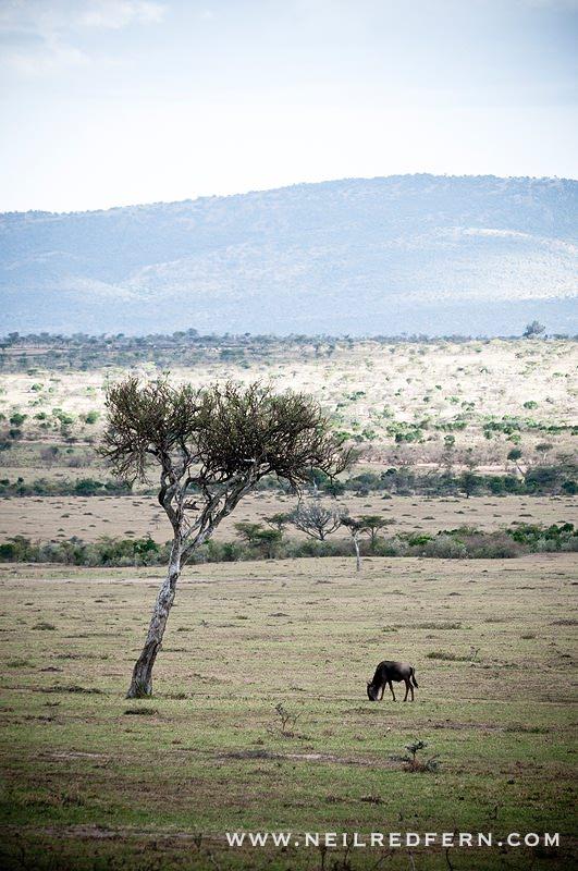 Safari Honeymoon Kenya Photographs 17