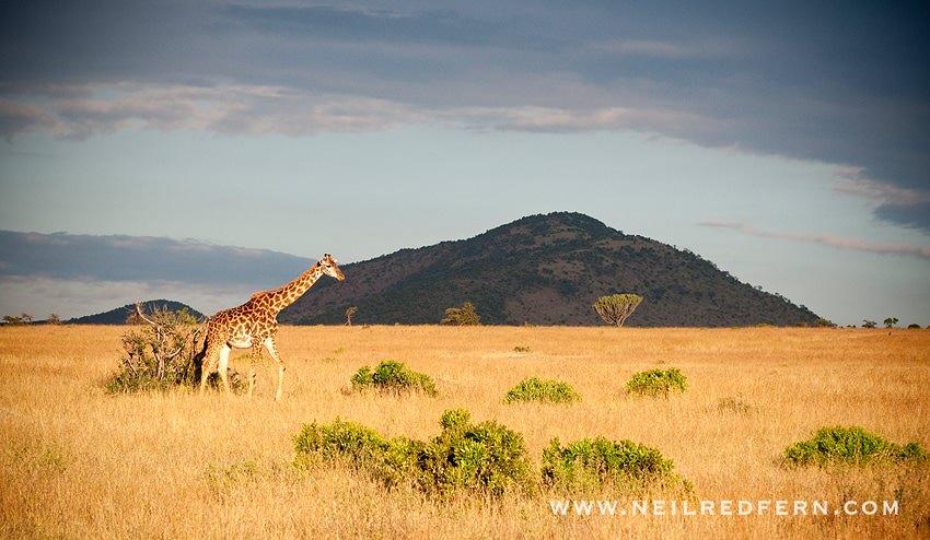 Safari Honeymoon Kenya Photographs 20