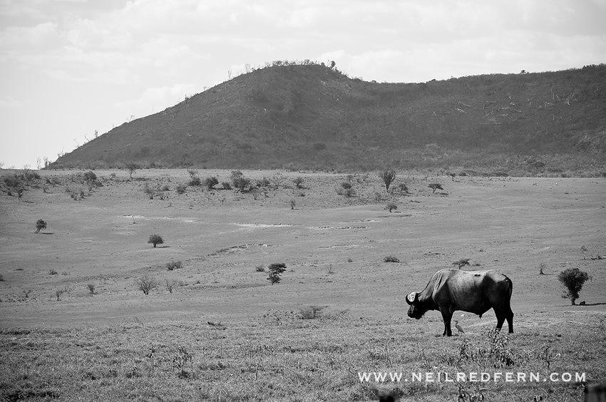 Safari Honeymoon Kenya Photographs 23