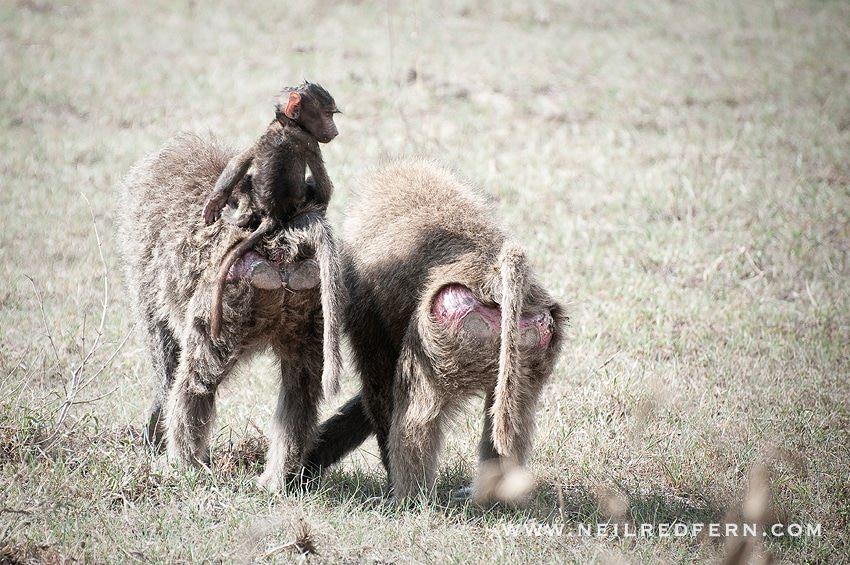 Safari Honeymoon Kenya Photographs 24