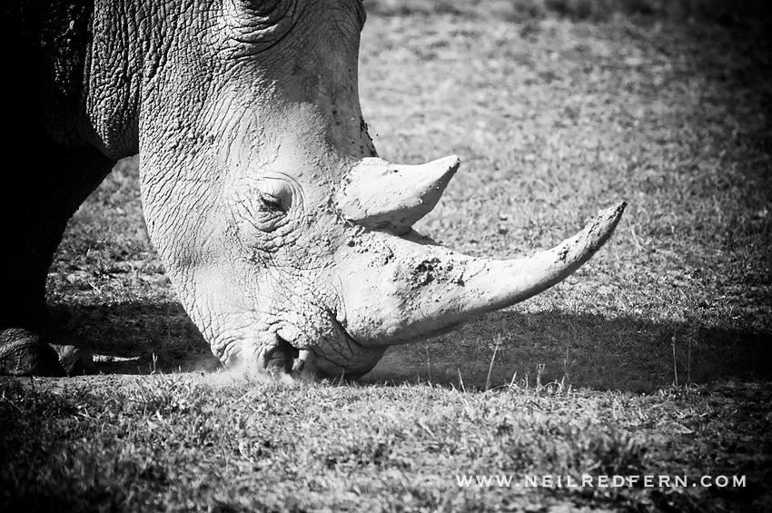 Safari Honeymoon Kenya Photographs 25