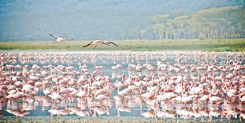 Safari Honeymoon Kenya Photographs 26