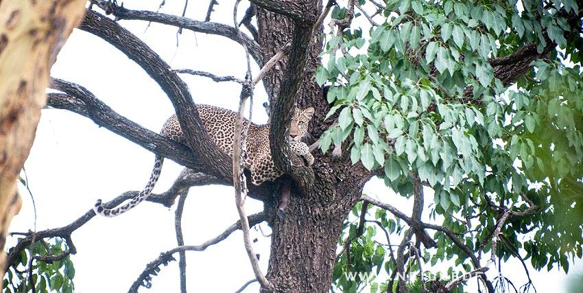 Safari Honeymoon Kenya Photographs 28
