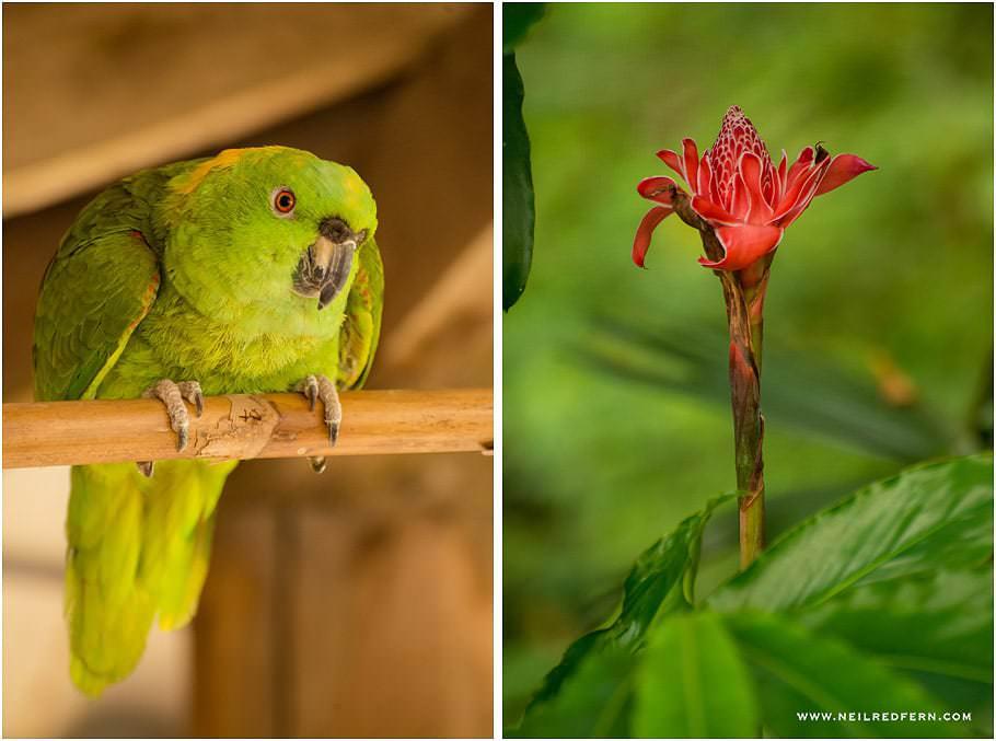 Costa Rica 08