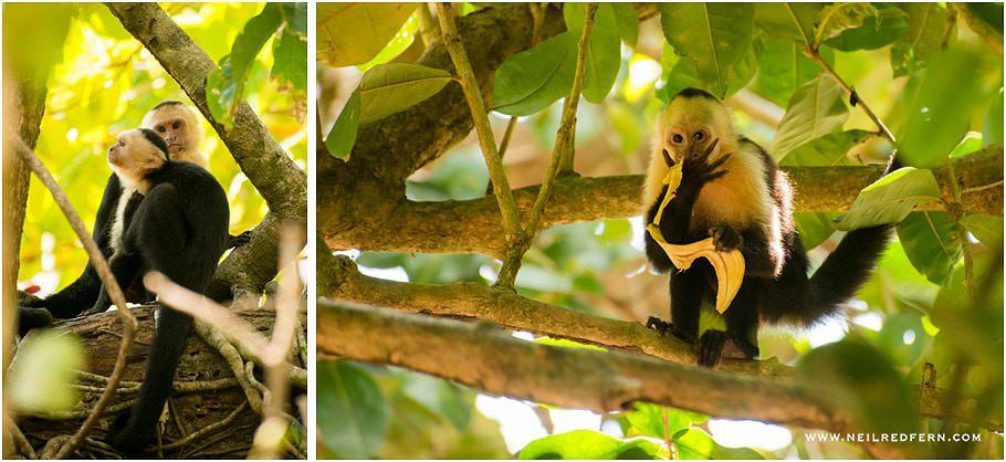 Costa Rica 31