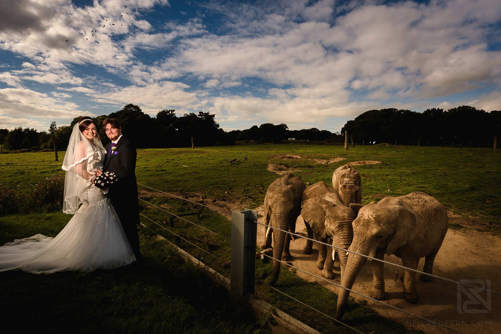 bride and groom with elephants