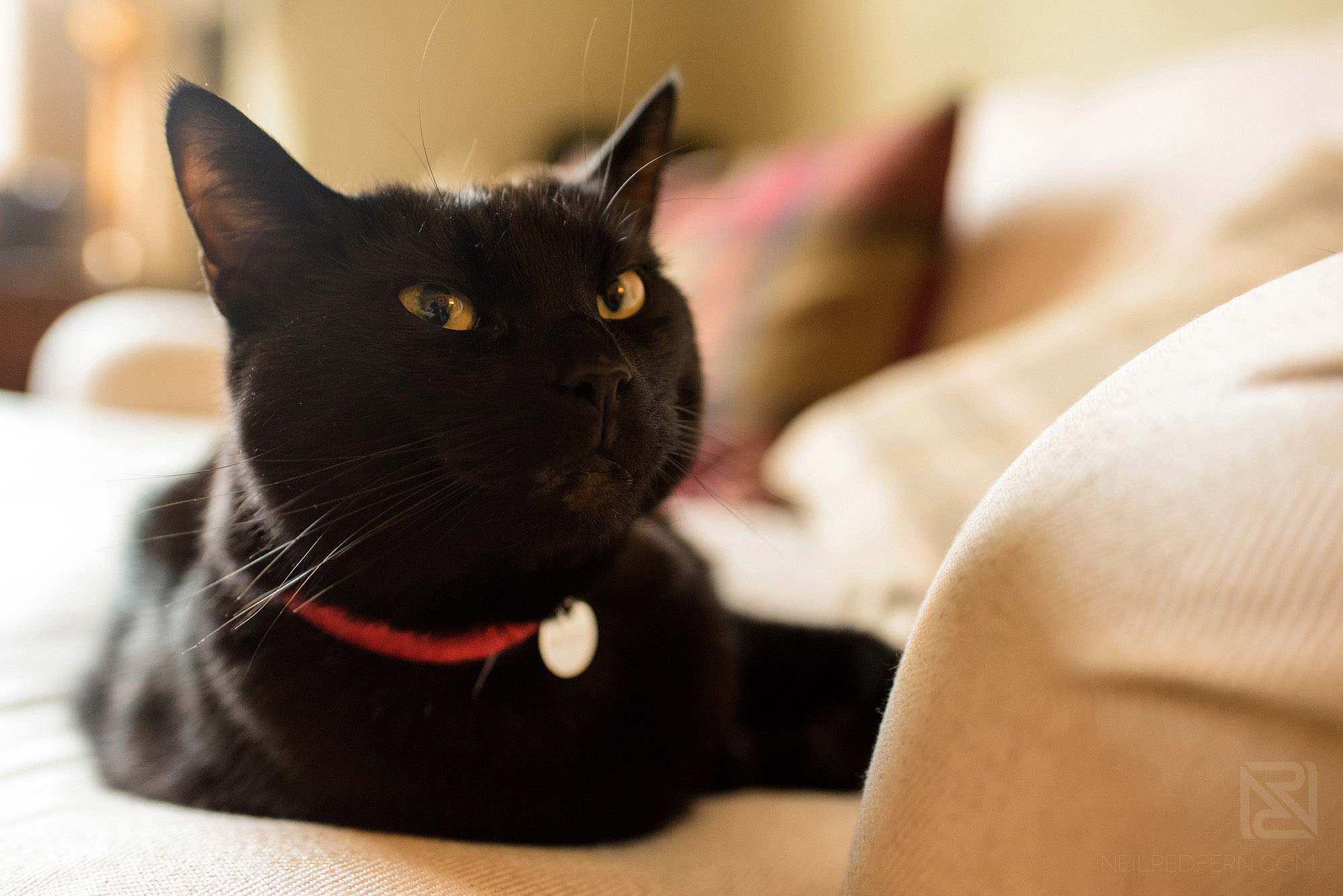 black cat sitting on chair on morning of wedding