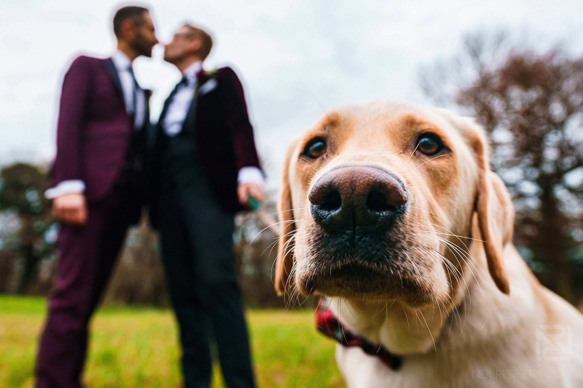 two grooms kissing with pet dog in foreground